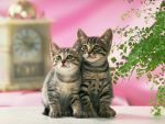 JPG- Gambar-gambar Kucing - Kitty Funny Full Colors